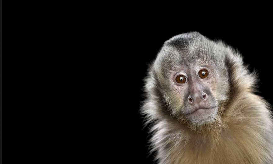Brad Wilson: el fotógrafo de los animales salvajes