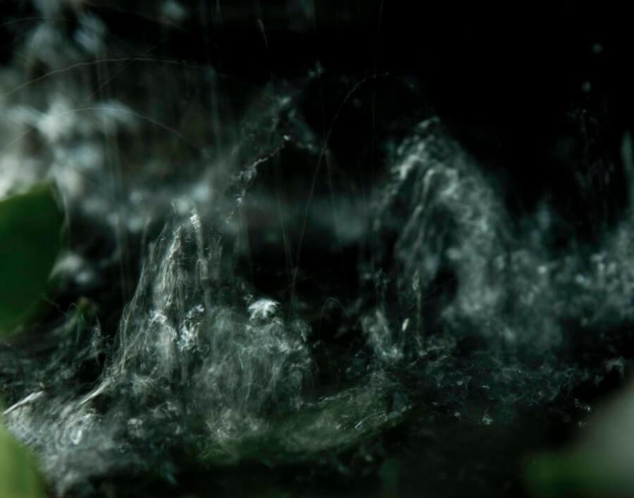 Gavilán Yelou en la Galería Agua Fuerte