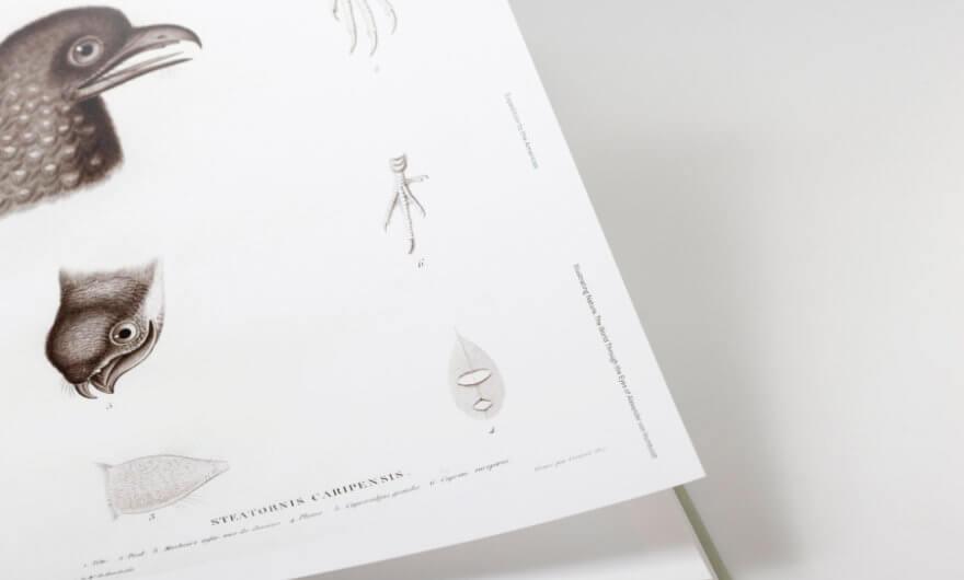 El mundo de von Humboldt a través de ilustraciones - ACC