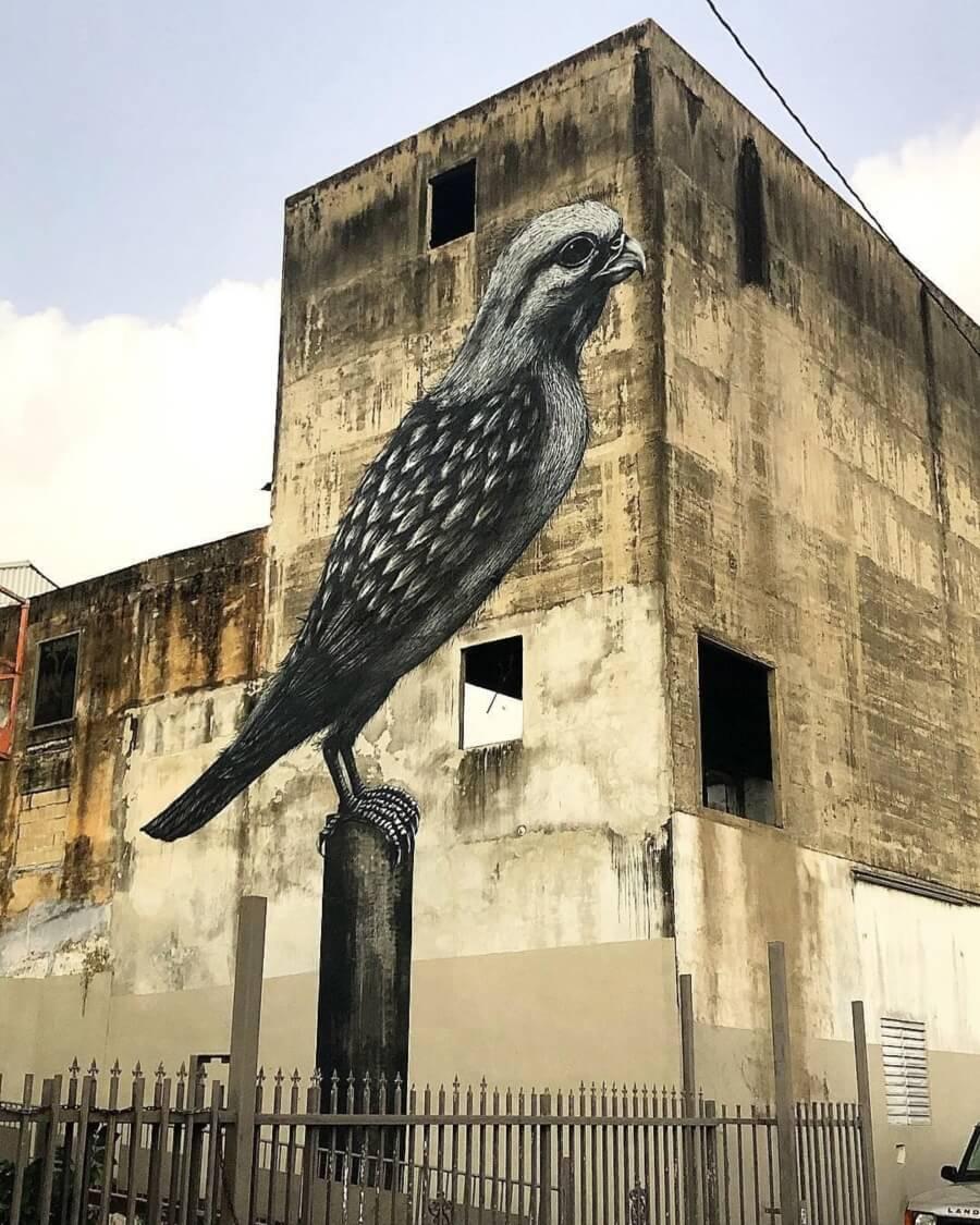 Ave en grises sobre edificio por ROA