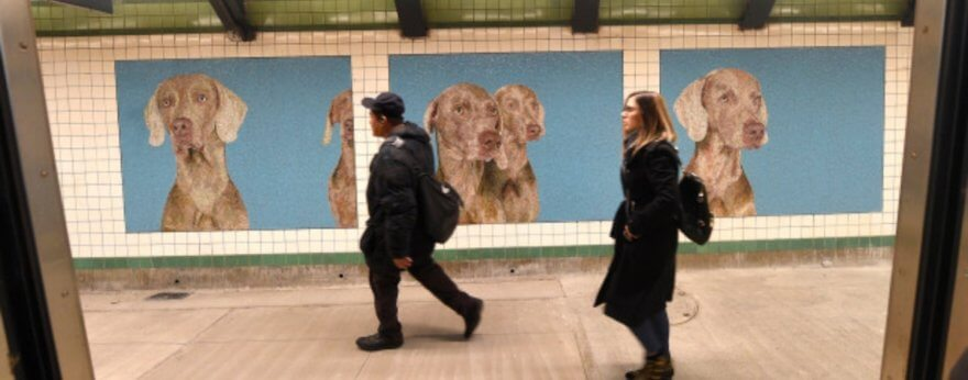 William Wegman y sus encantadores mosaicos
