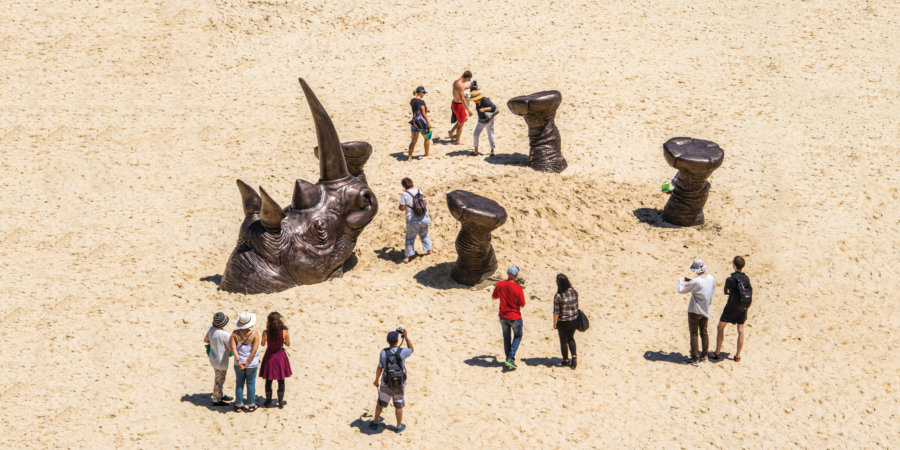 fotografía del rinoceronte en una playa de Australia