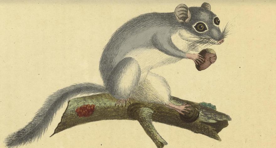 La Biblioteca del Patrimonio de la Biodiversidad abre magnogalería