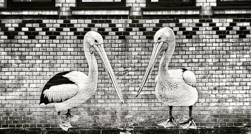 Sonac expondrá sus collages de animales en Bélgica