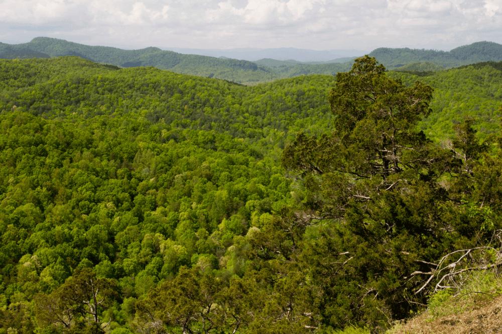 Box Creek Wilderness, propiedad de Tim Sweeney