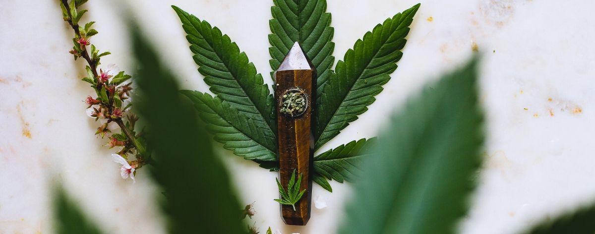 THC vs CBD: diferencias entre los componentes del cannabis