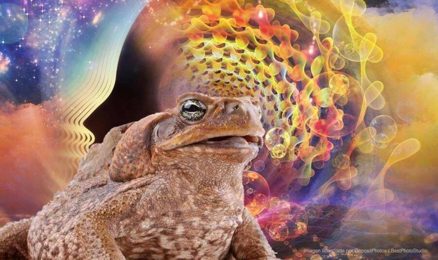 "The toad ""medicine"""