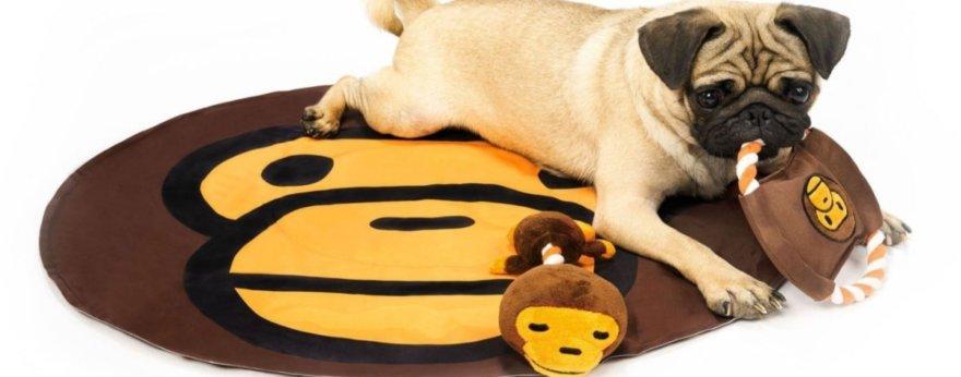 Baby Milo nos presenta colección para perritos