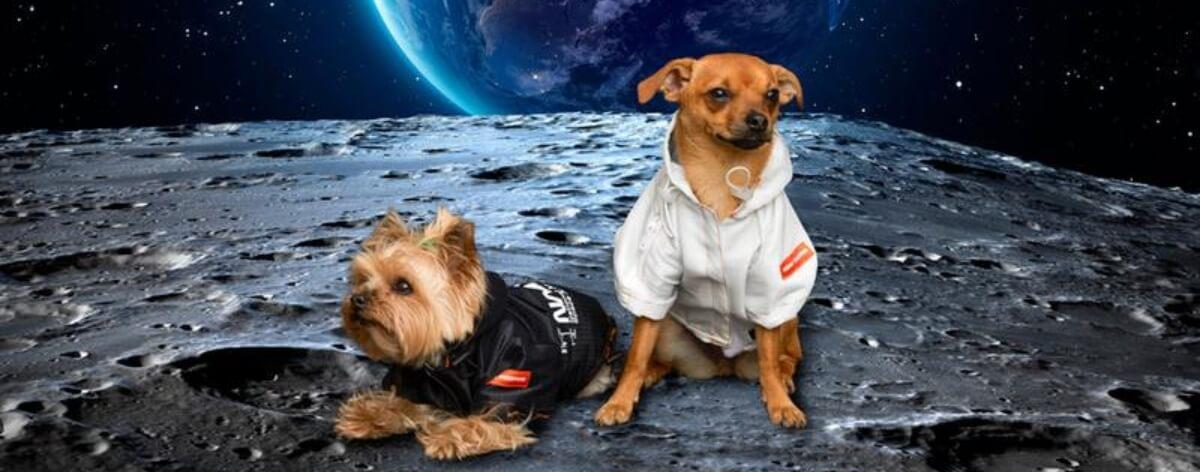 Heron Preston y NASA lanzan colección para mascotas