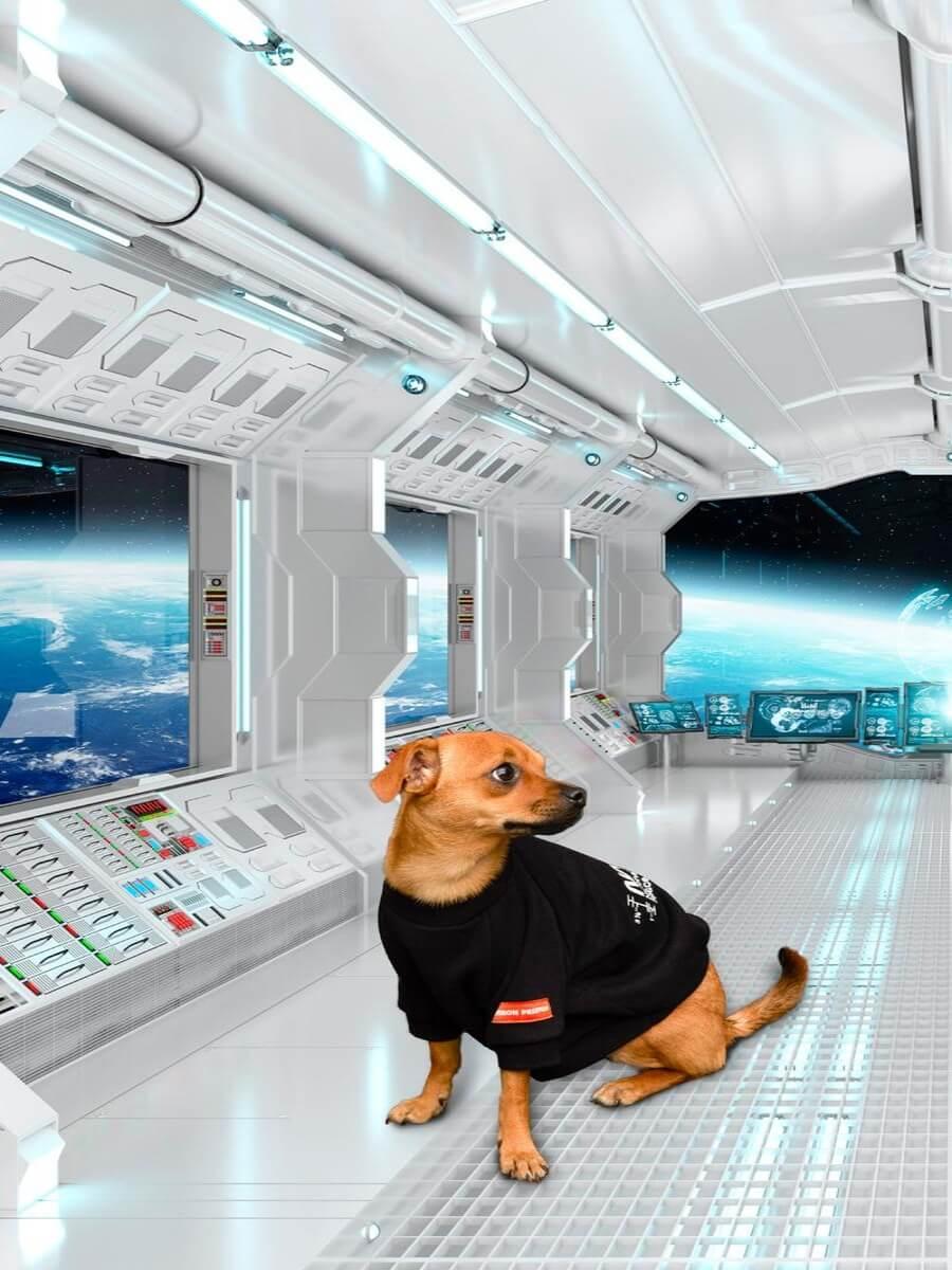 Heron Preston y NASA presentan colección para perros
