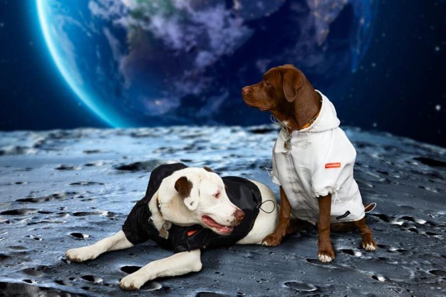 Streetwear para perros