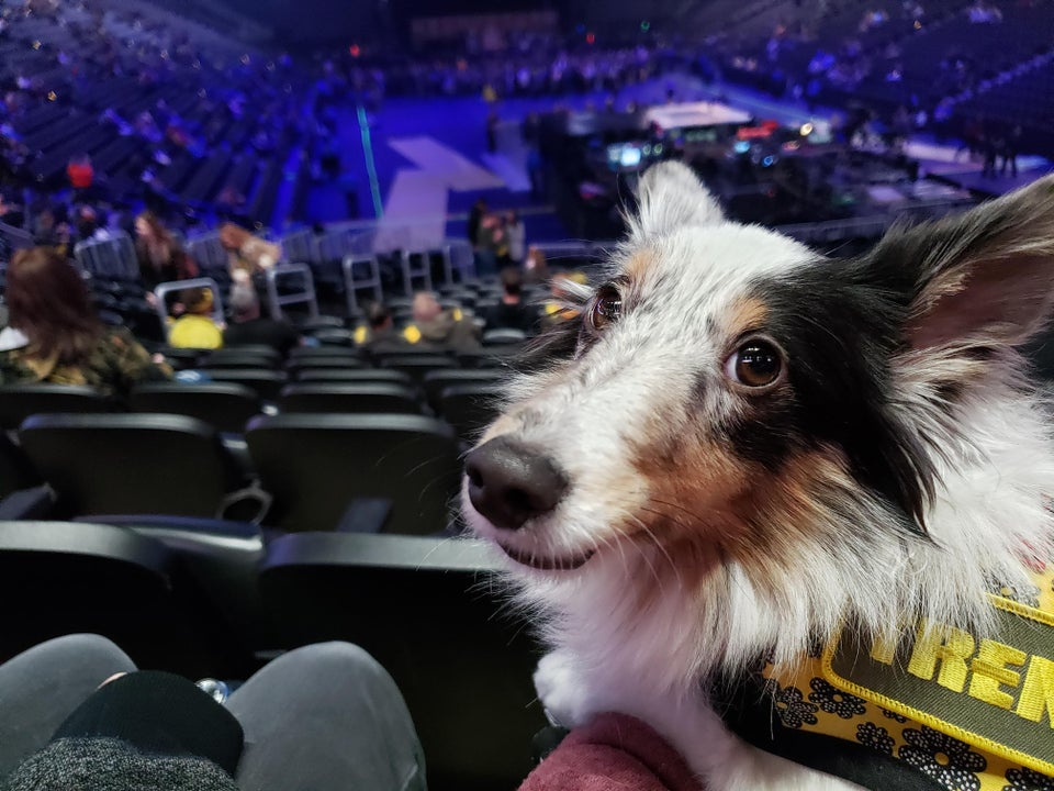 Dog in a concert