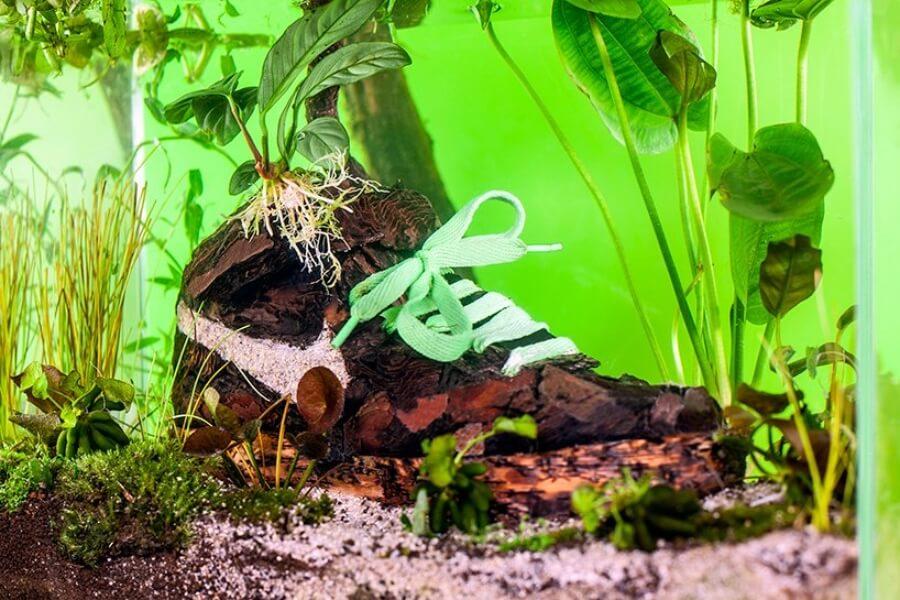 Pecera con sneaker intervenido de Mr. Plant