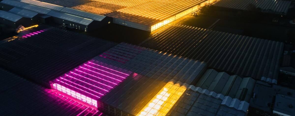 Tom Hegen fotografía invernaderos de LED en los Países Bajos