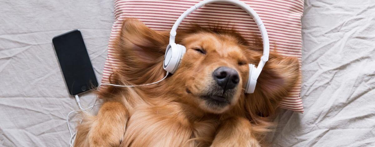 Spotify for pets, rolas para nuestras bendiciones peludas