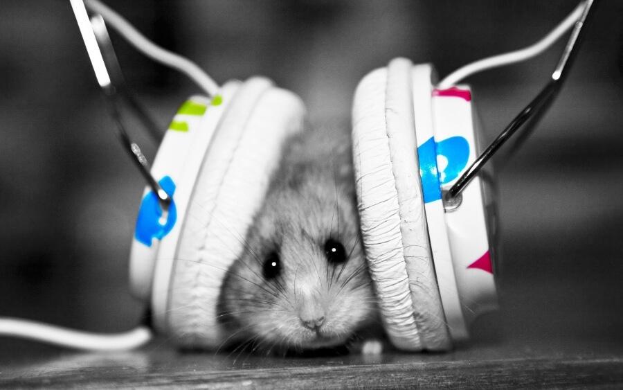 La plataforma de música presentó playlist para mascotas