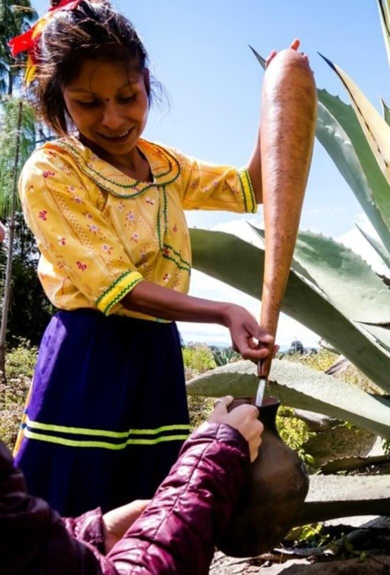 Mujeres Milenarias al rescate del pulque