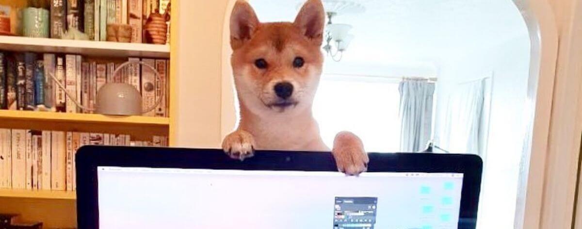 Home Office con perritos para pasar la cuarentena