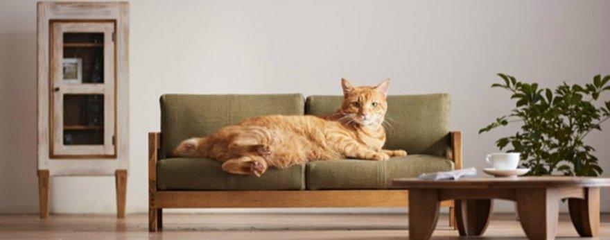 Okawa Kagu lanza colección de muebles para gatos