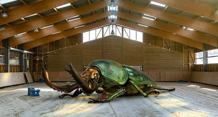 Renaud Marion y la redimensión de los insectos
