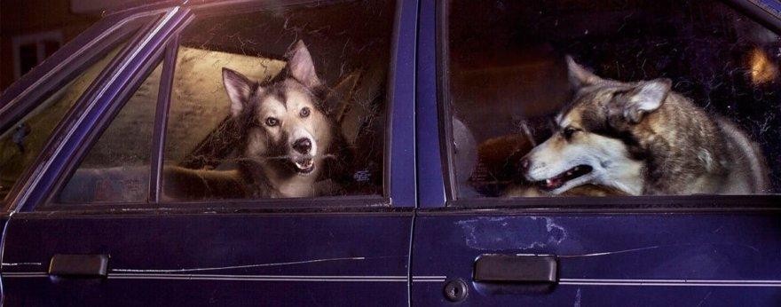 Martin Usborne y sus retratos de perros