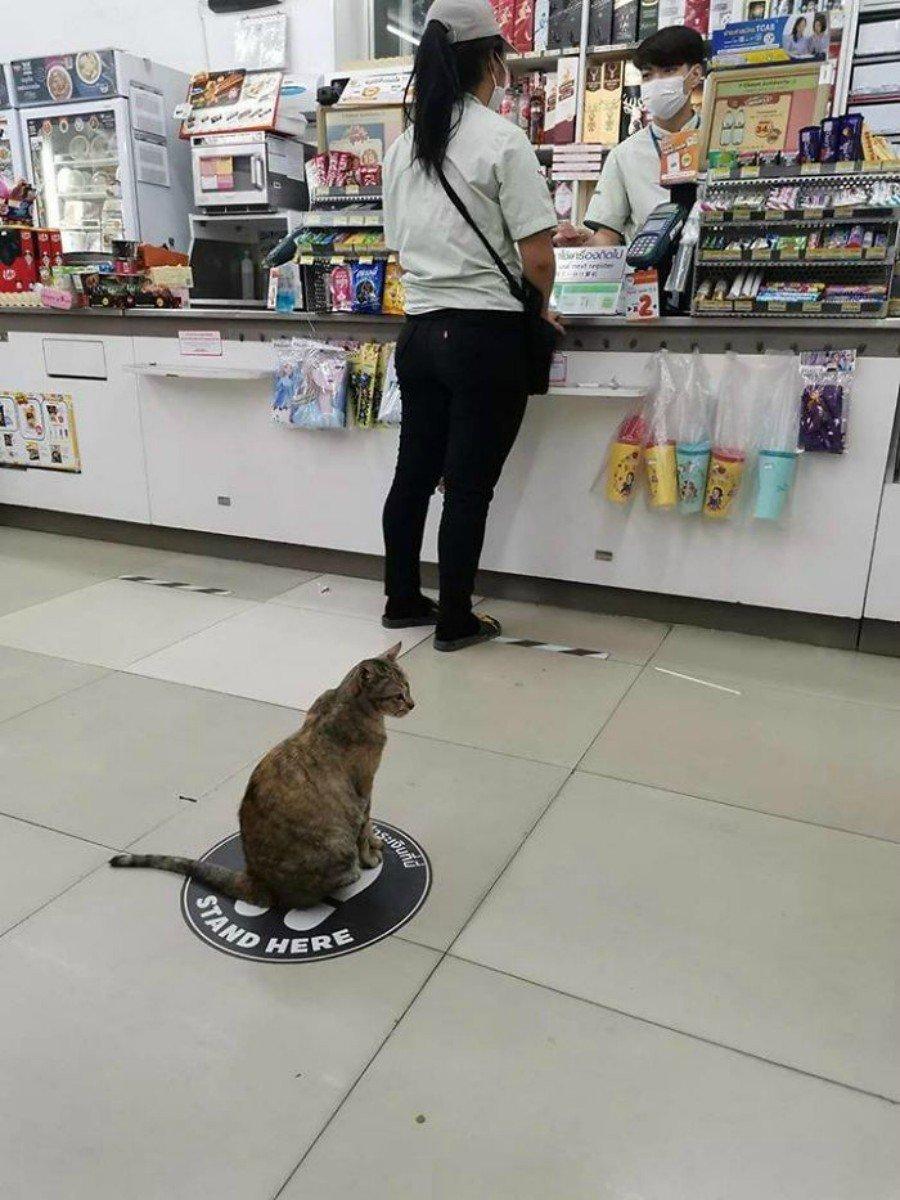 animalitos distanciados