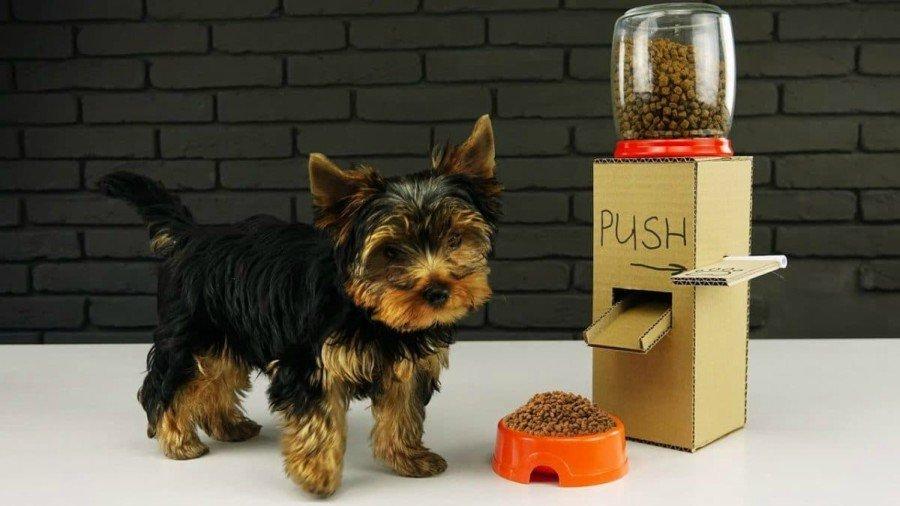 autoservicio para perros
