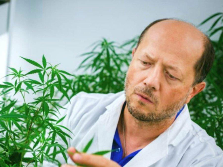 Cannabis against Coronavirus