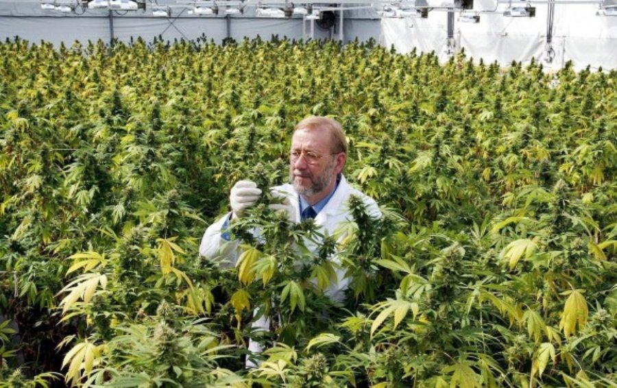 Study reveals plant benefits