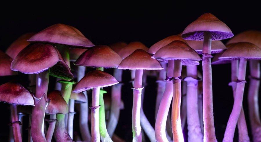 La psiclocibina y el viaje introspectivo de los hongos