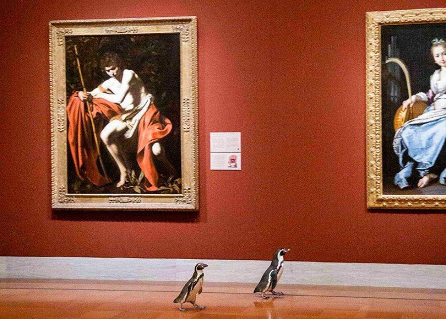 Paseo de pingüinos