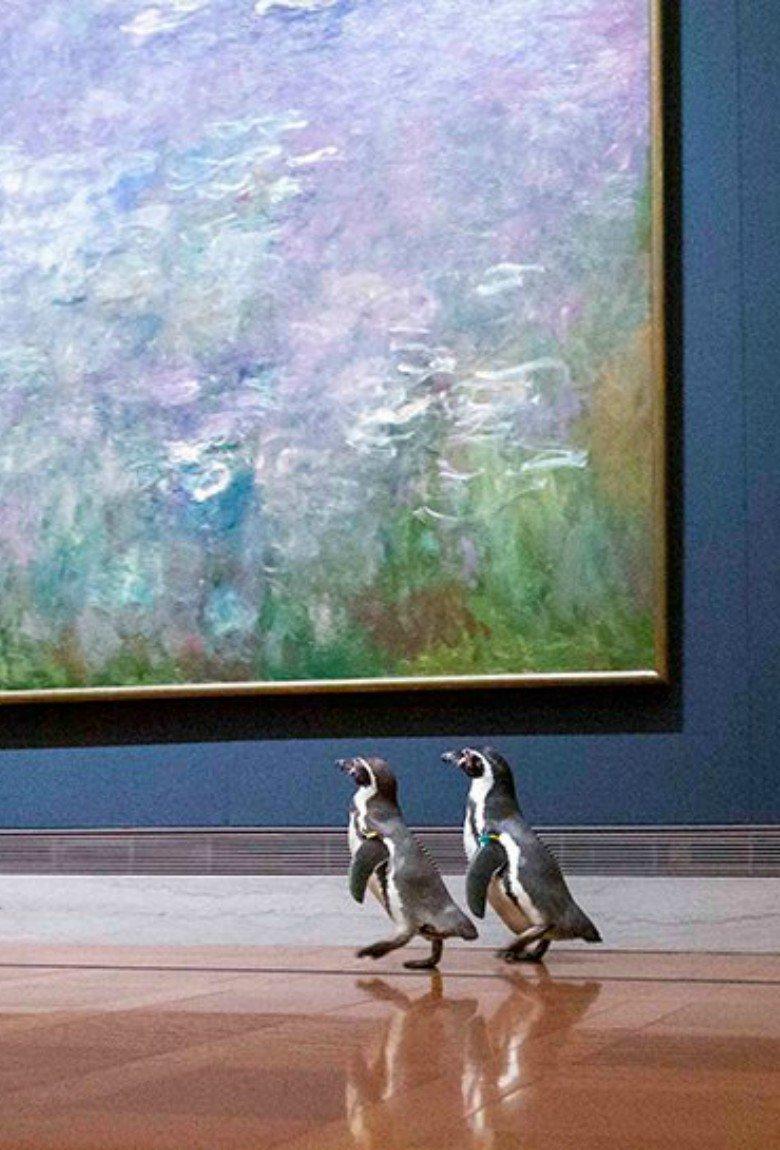 Paseo de pingüinos en museo de arte en Kansas