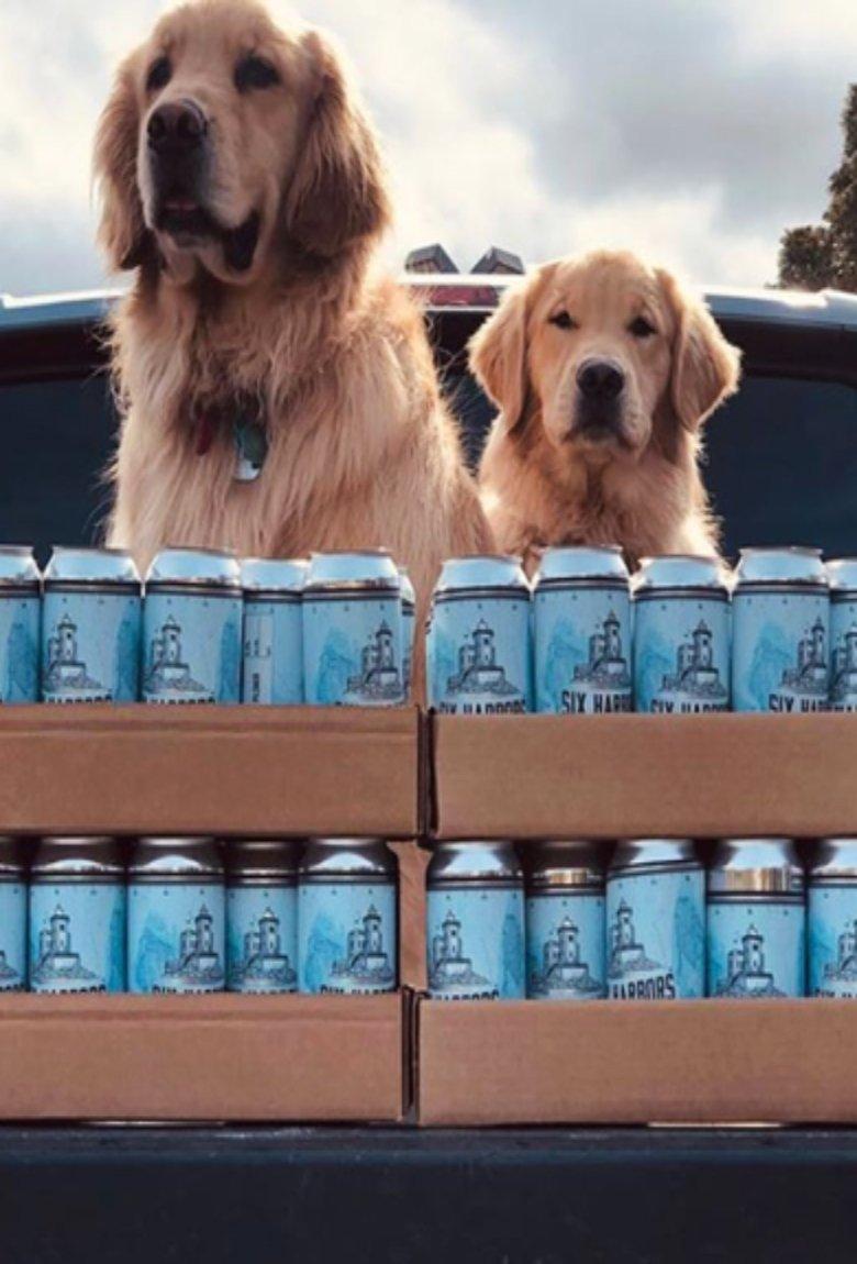 Perritos que entregan cerveza durante la cuarentena