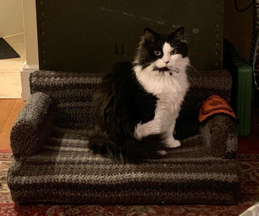 sofás para gato