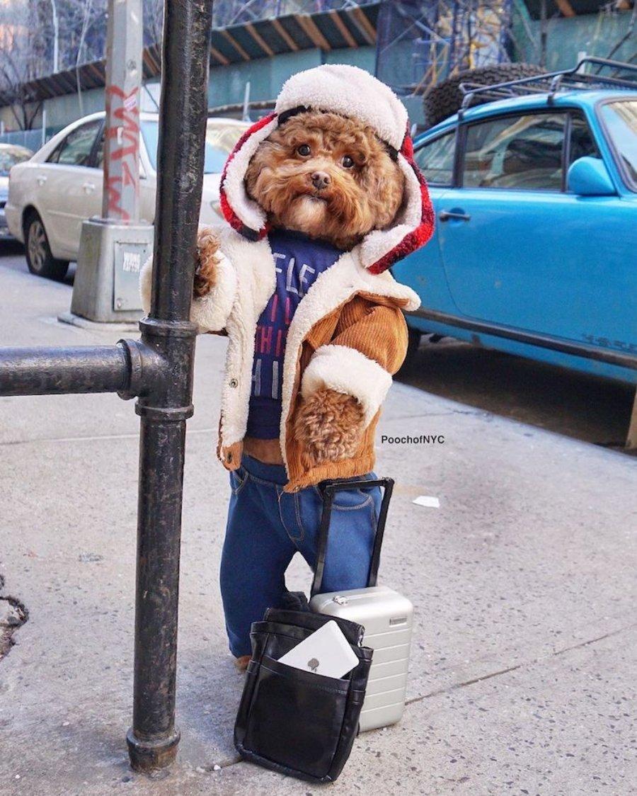 Bob Ross tiene un doble y es este pequeño poodle