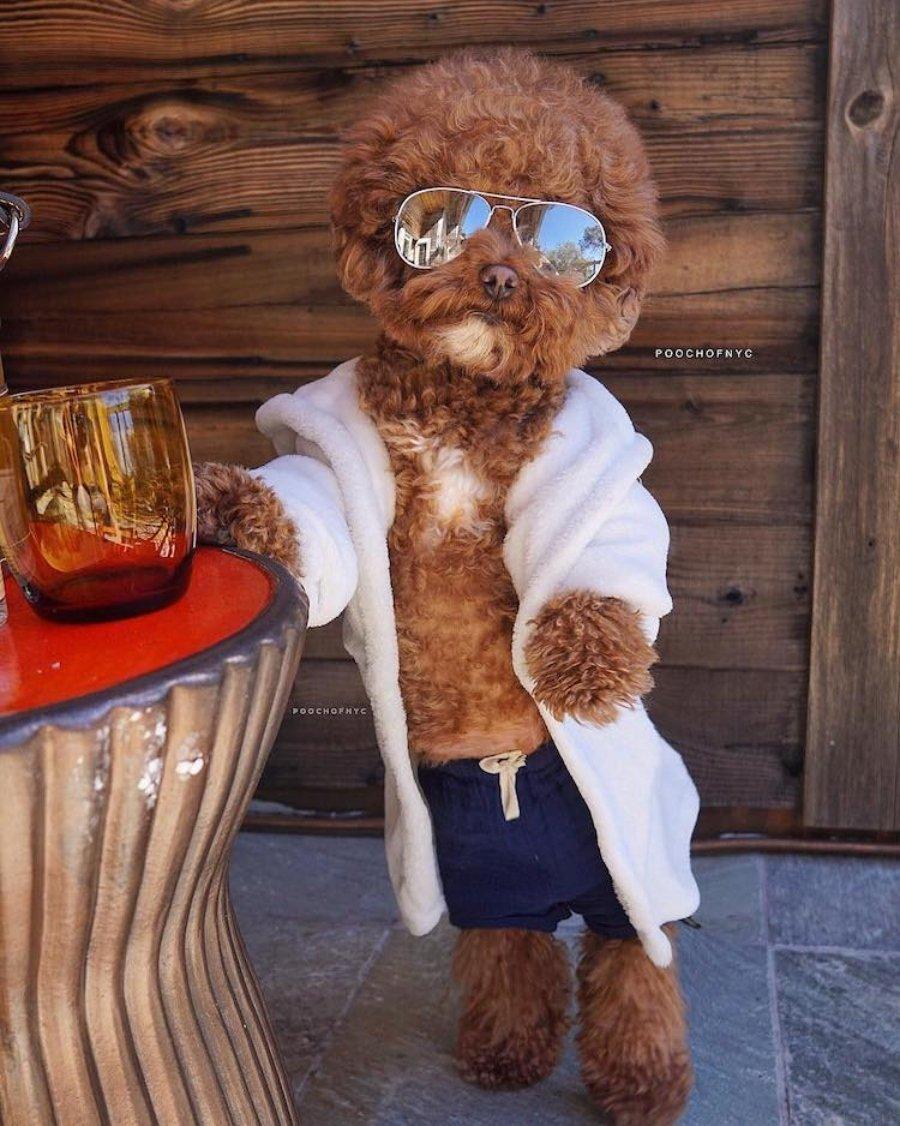 Agador, perro disfrazado con gafas