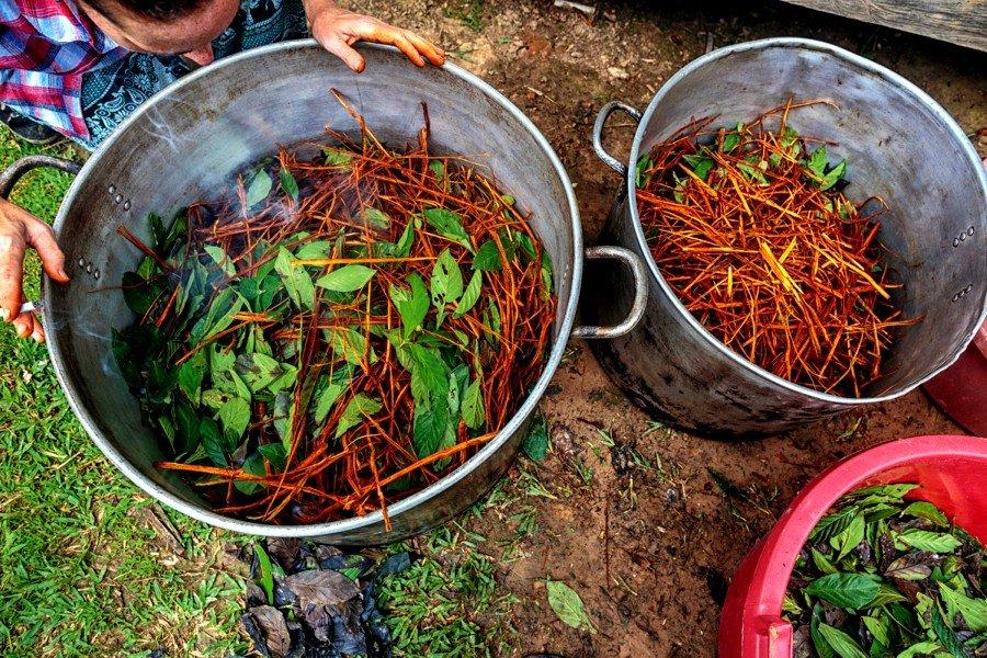 La sustancia DMT presente en la Ayahuasca dentro de ollas