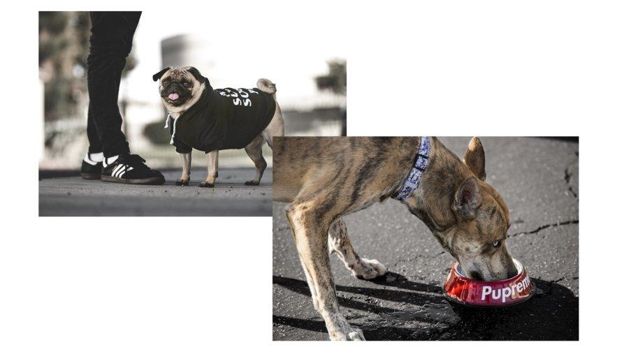 Tazon Pupreme y sudadera Anti Popy social Club para perritos de Fresh Pawz