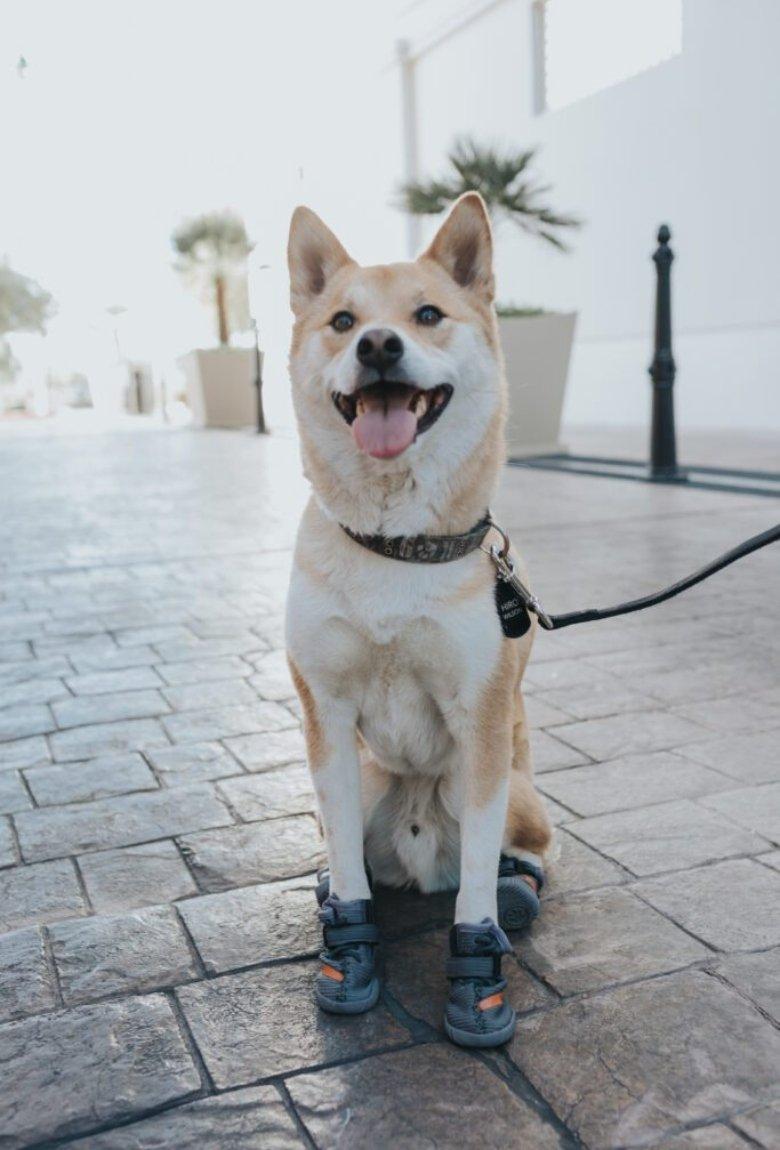 Fresh Pawz, streetwear para los perritos
