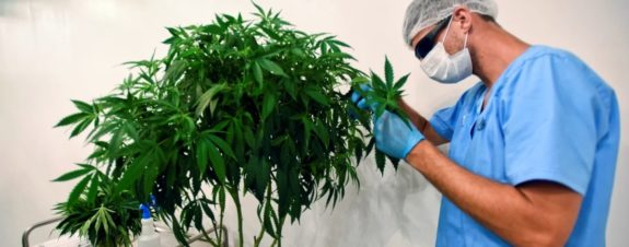 The WHO will remove cannabis from drug classification