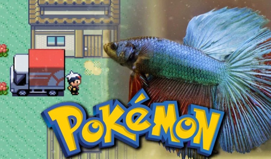 Collage fotográfico de pez dentro del videojuego