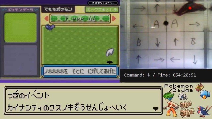 Captura de pantalla de pez en el videojuego