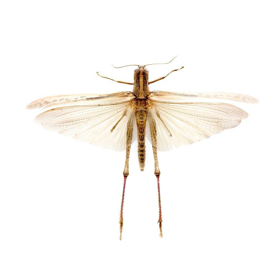 insecto, fotografía perteneciente a Fernando Marroquín expuesta en Sin nombre de Archivo colectivo