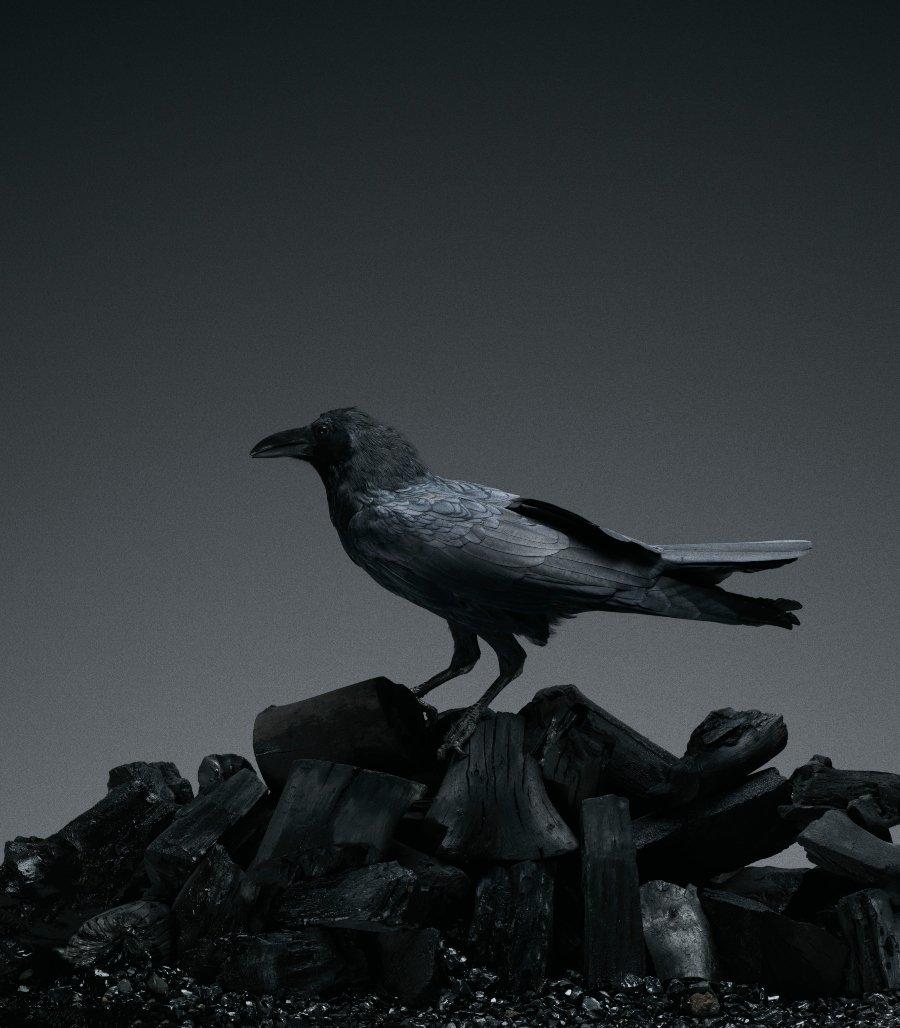 Cuervo sobre carbón, fotografía perteneciente a Fernando Marroquín expuesta en Sin nombre de Archivo colectivo