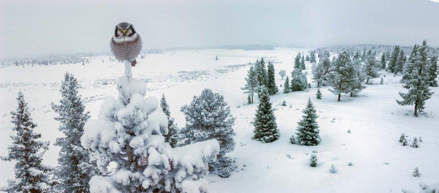 Las mejores fotografías de Bird Photography of the Year