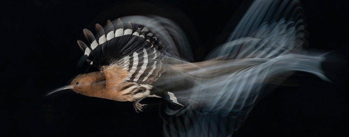 Bird Photographer of the Year: las mejores fotos de aves