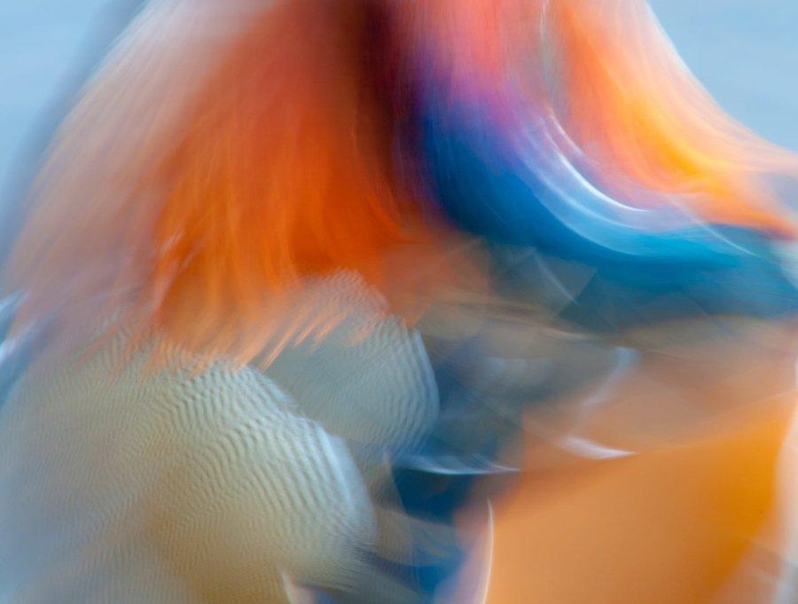 Electric de Carlos Cifuentes Fotografía: BPOTY / Imágenes de portada