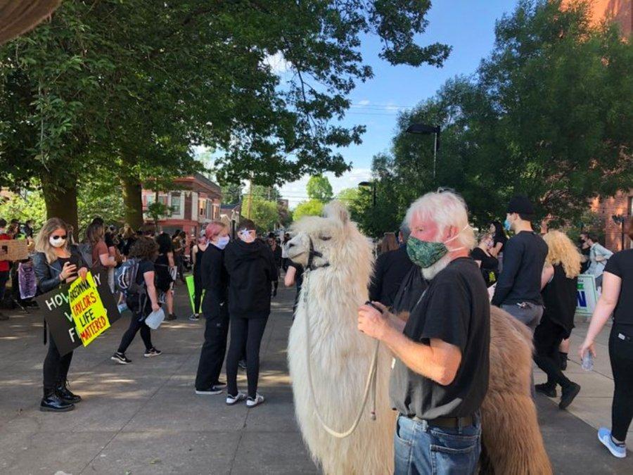 Caesar 'the no drama lama' at meeting