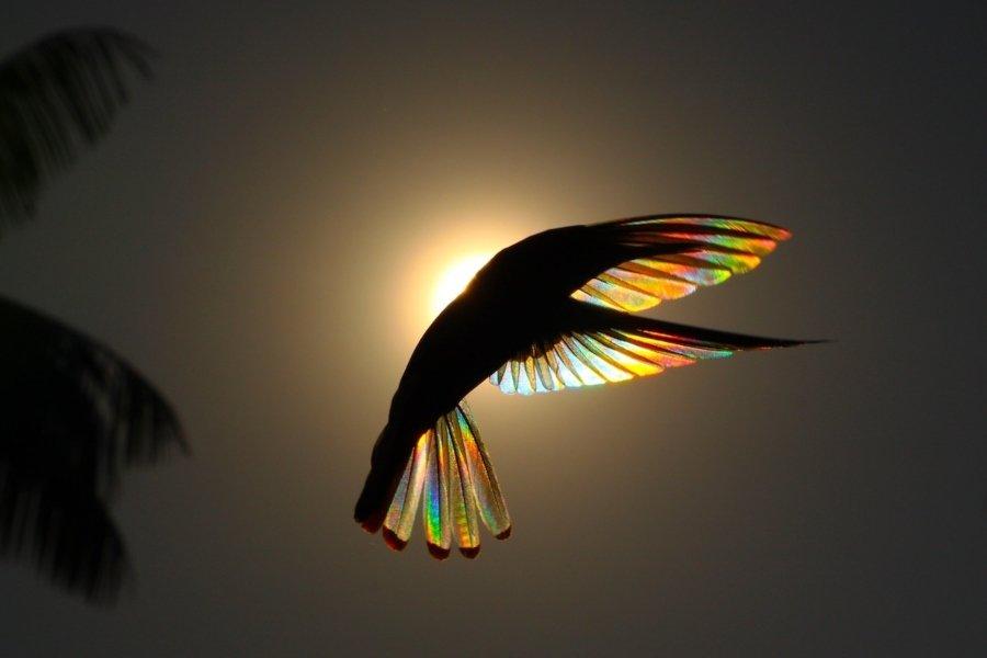 Fotografías de colibríes a contraluz de Christian Spencer