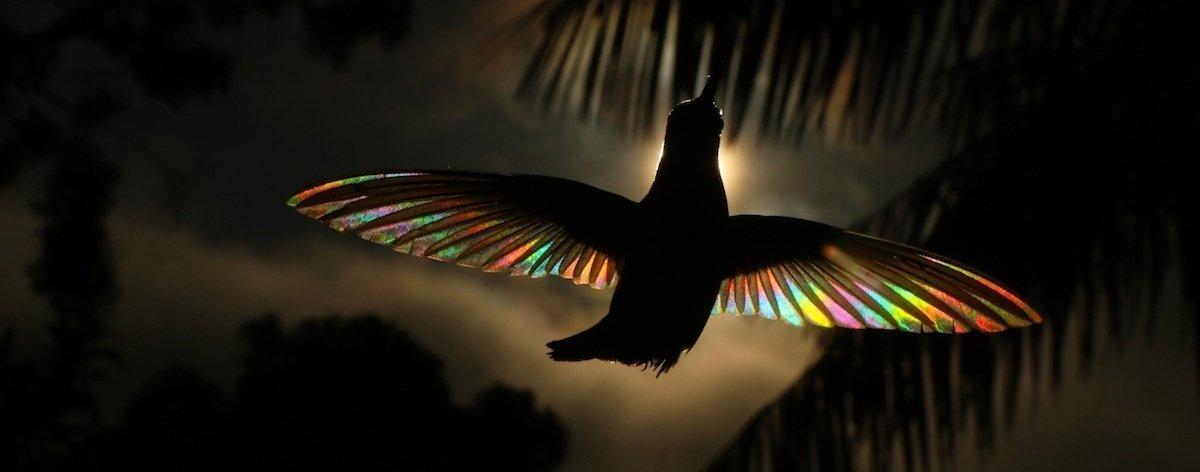 Christian Spencer y la belleza de los colibríes
